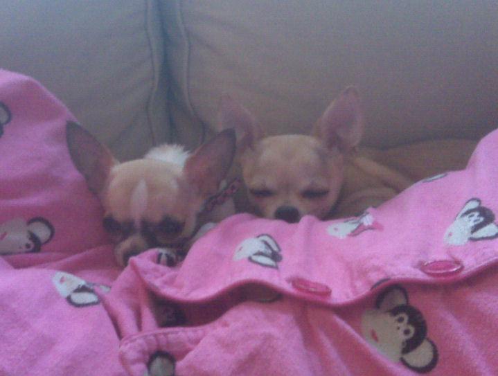 Cody & Chloe
