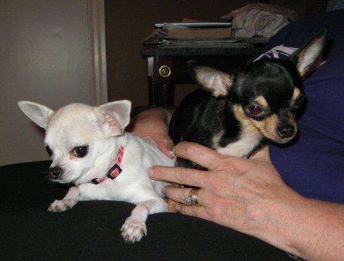Salin & Ella
