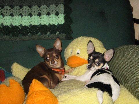 Twinkie & Tootsie